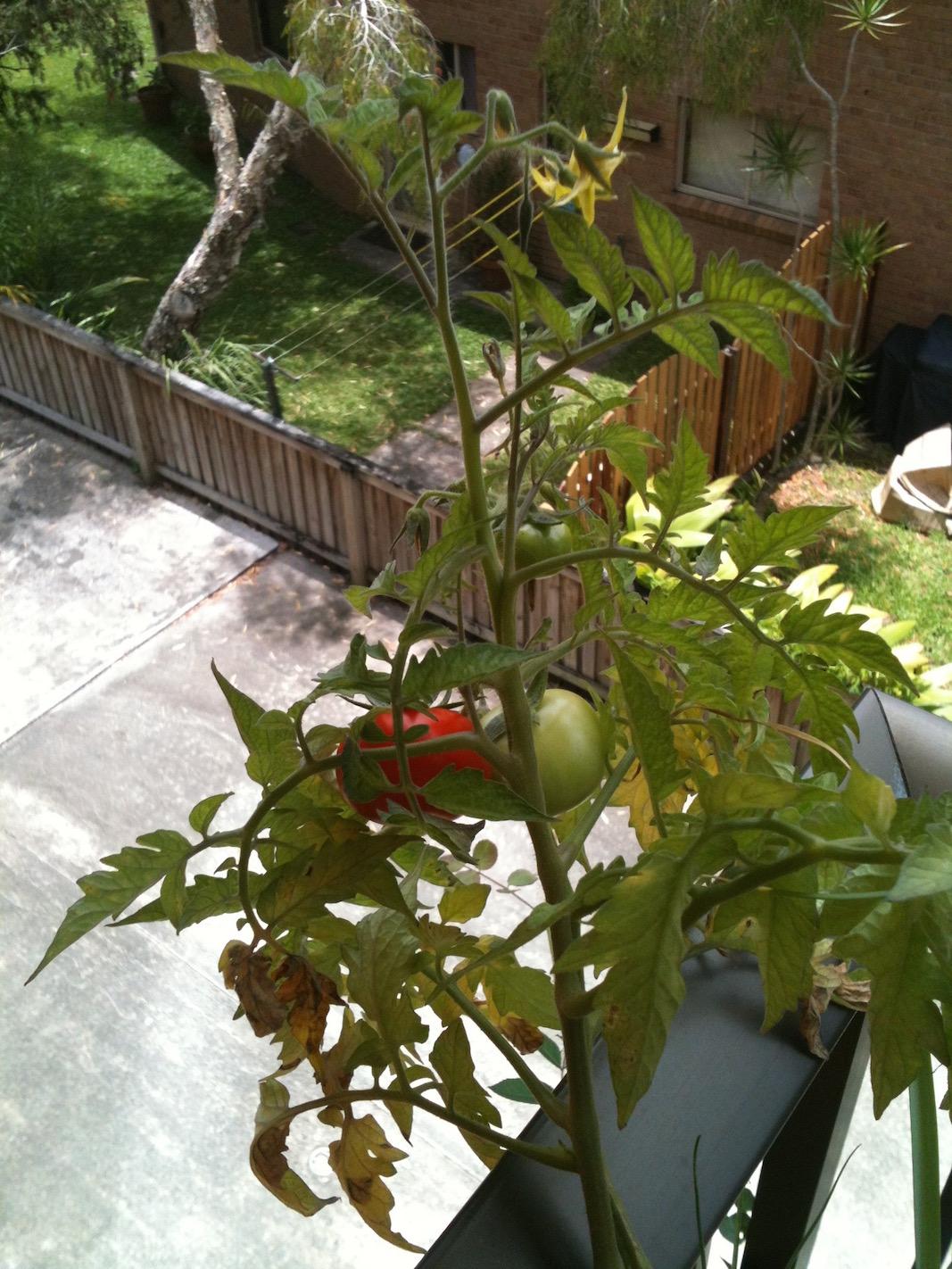 Balcony container garden mini container gardening - Best potting mix for container gardening ...