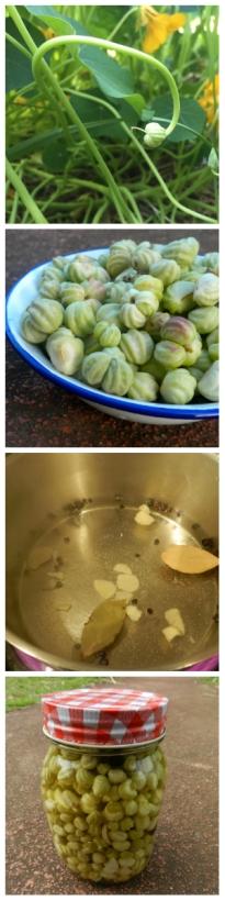nasturtium recipe