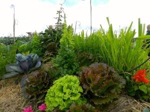 Permaculture Kitchen Garden