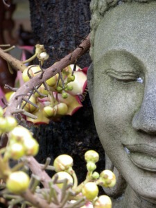 Buddha Environmental Ethics Water
