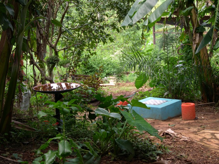 Food Forest Ecocentro IPEC