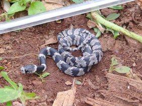 Snakes in Brazil
