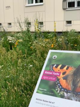 Butterfly garden in Berlin