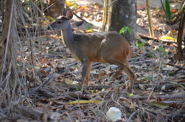 Deer at Ecocentro IPEC